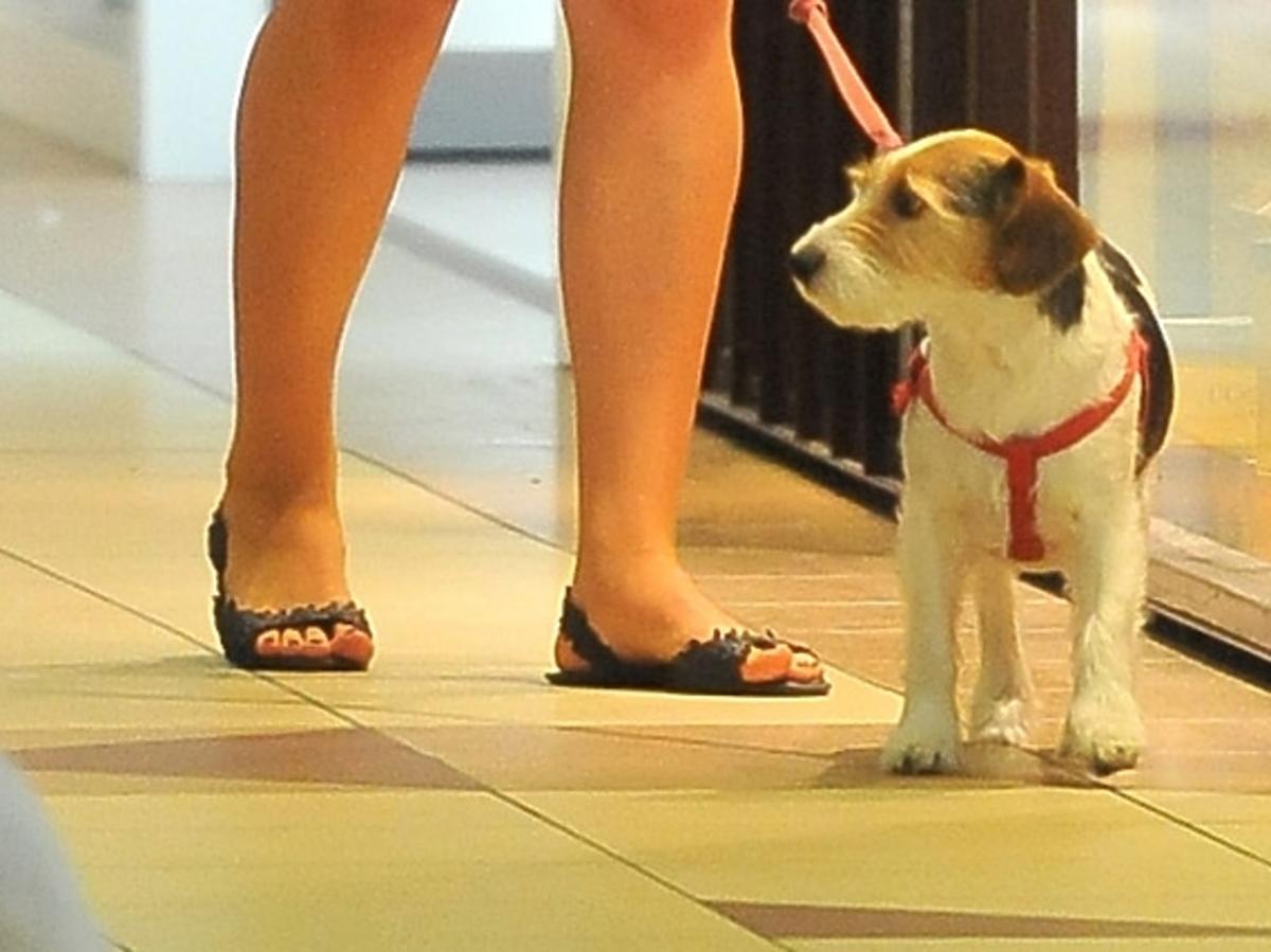 Zofia Zborowska z psem na zakupach