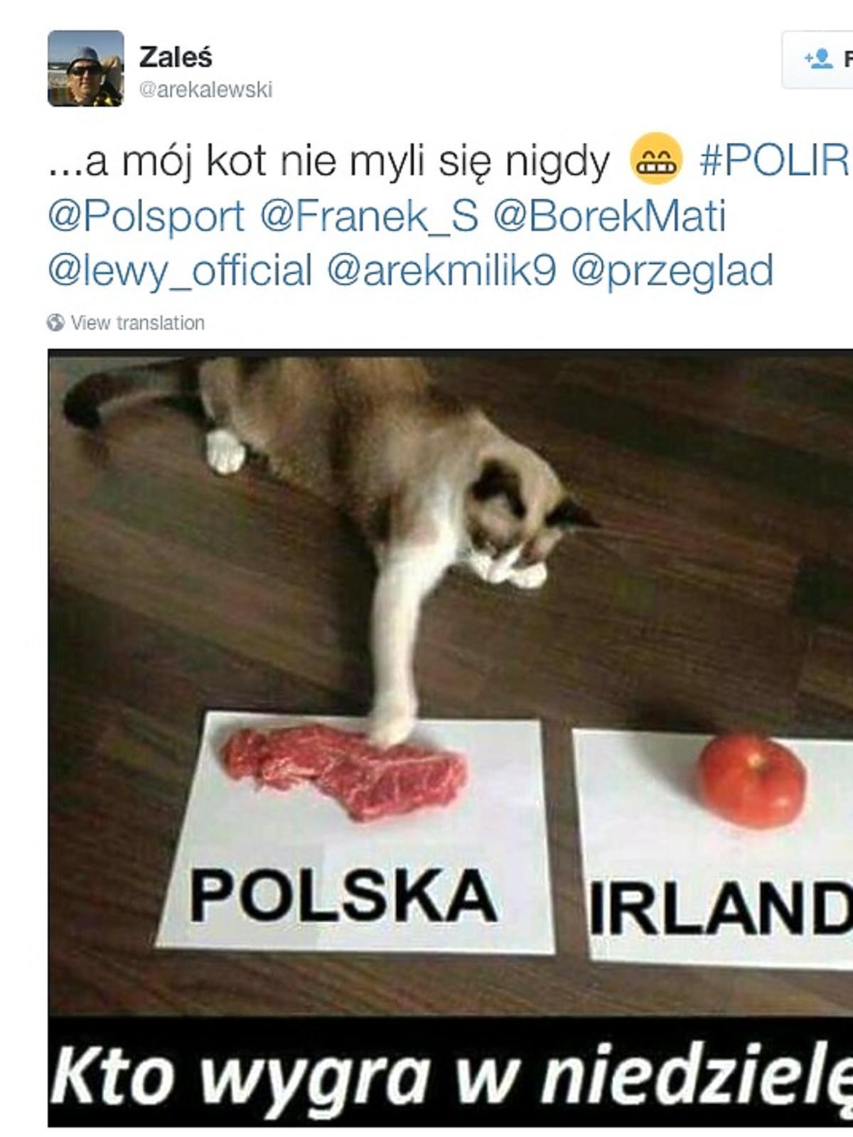 Mecz polska-Irlandia, mem z kotem