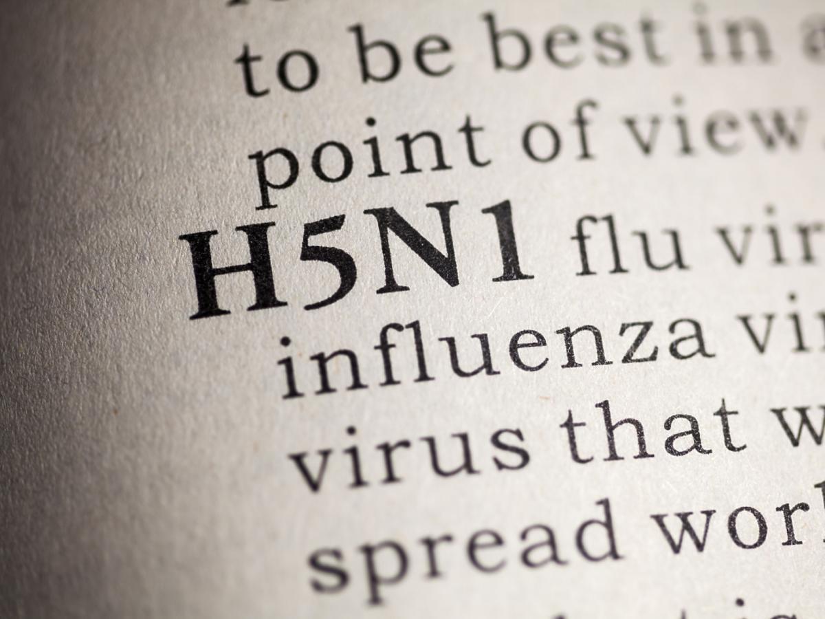 definicja ptasiej grypy