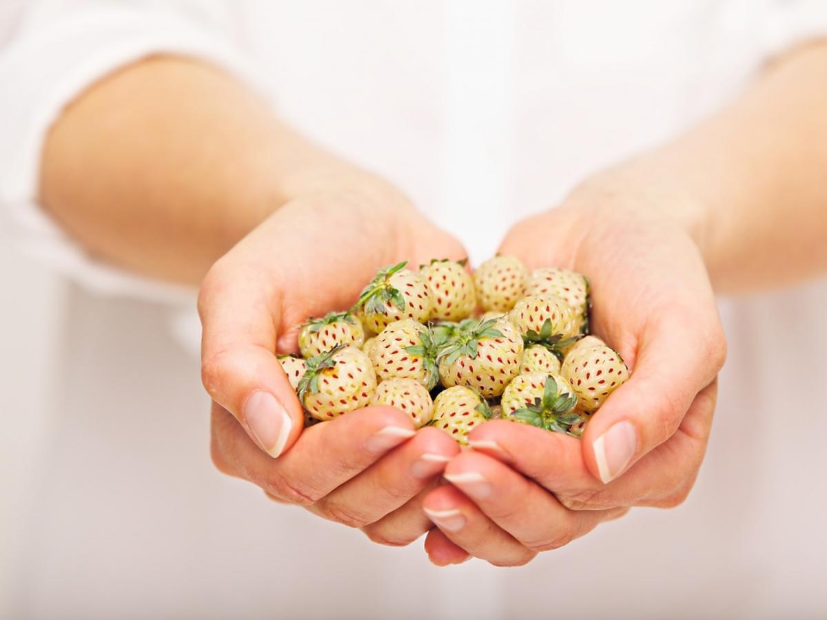 białe truskawki w ręku