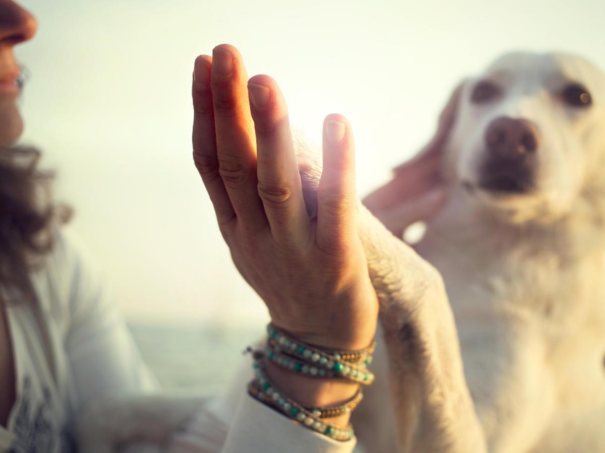 """Człowiek i pies przybijają """"piątkę""""."""