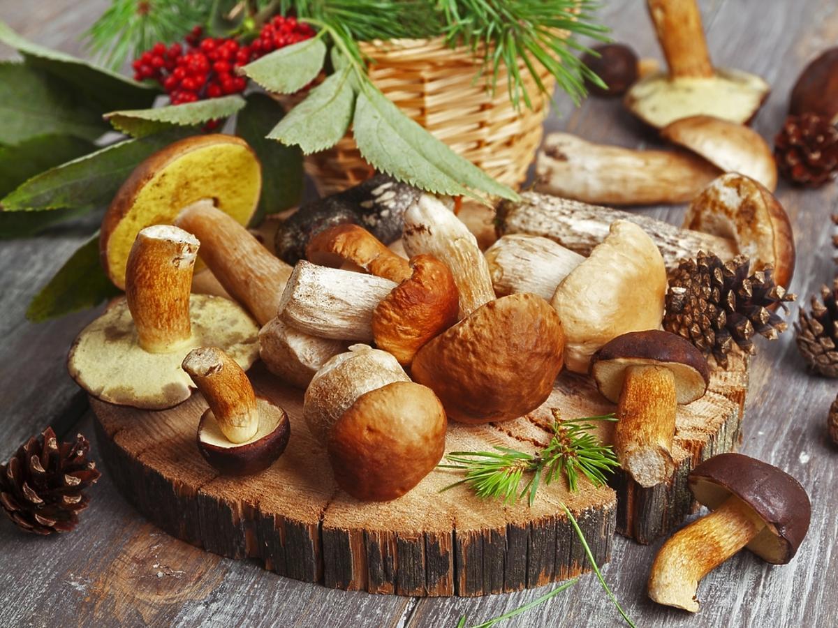 Czy warto jeść grzyby? Wartości odżywcze grzybów