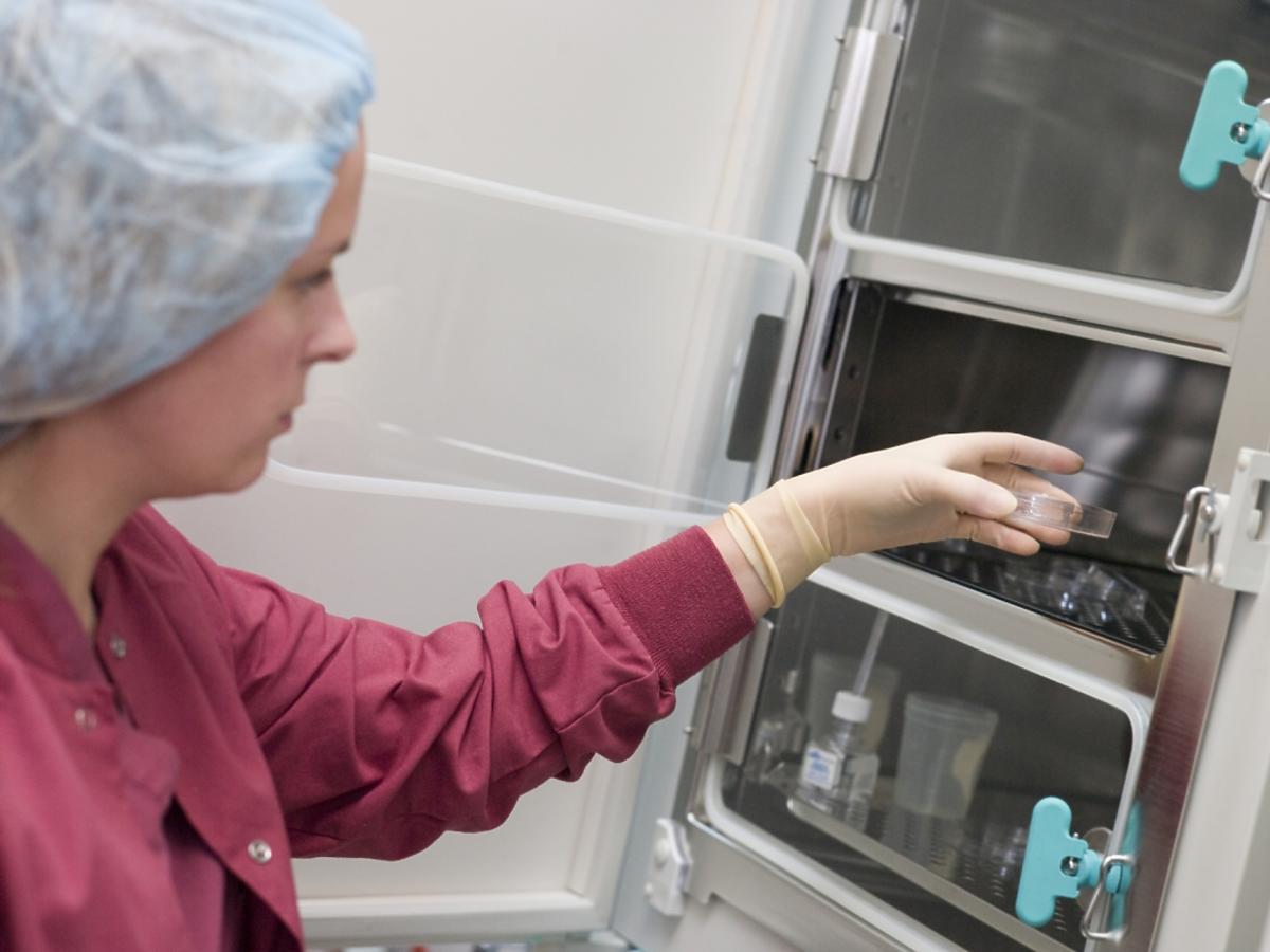 Embriolog umieszcza próbki w inkubatorze