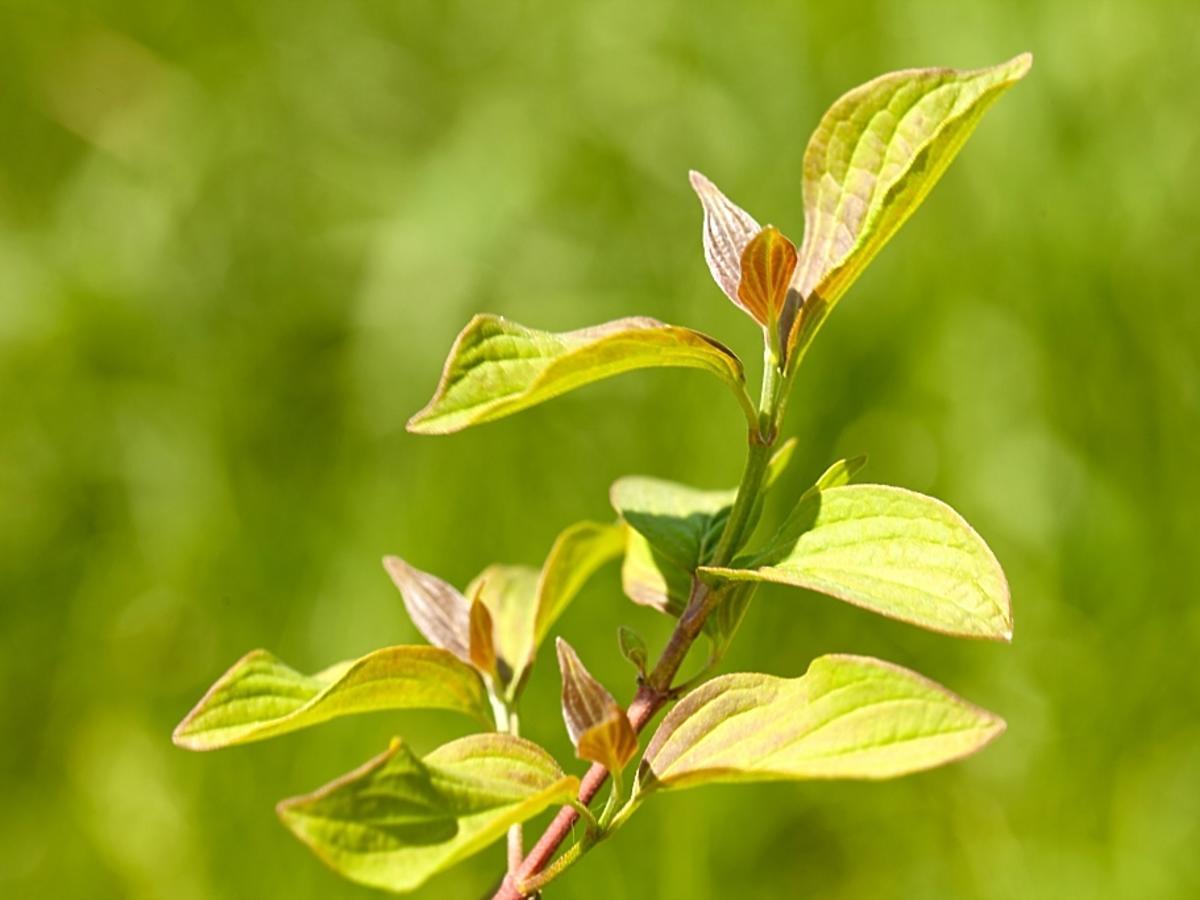 Gałązka ziela