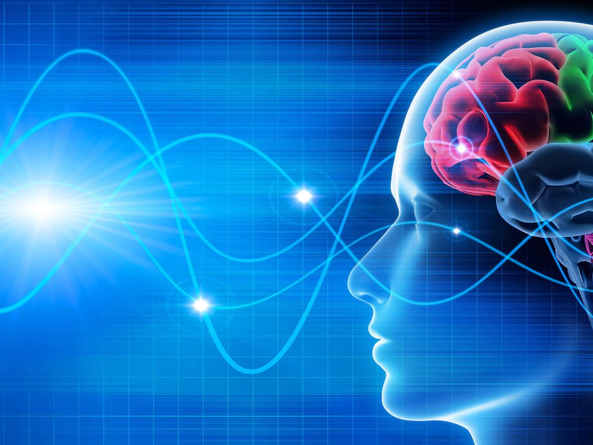 Grafika mózgu człowieka