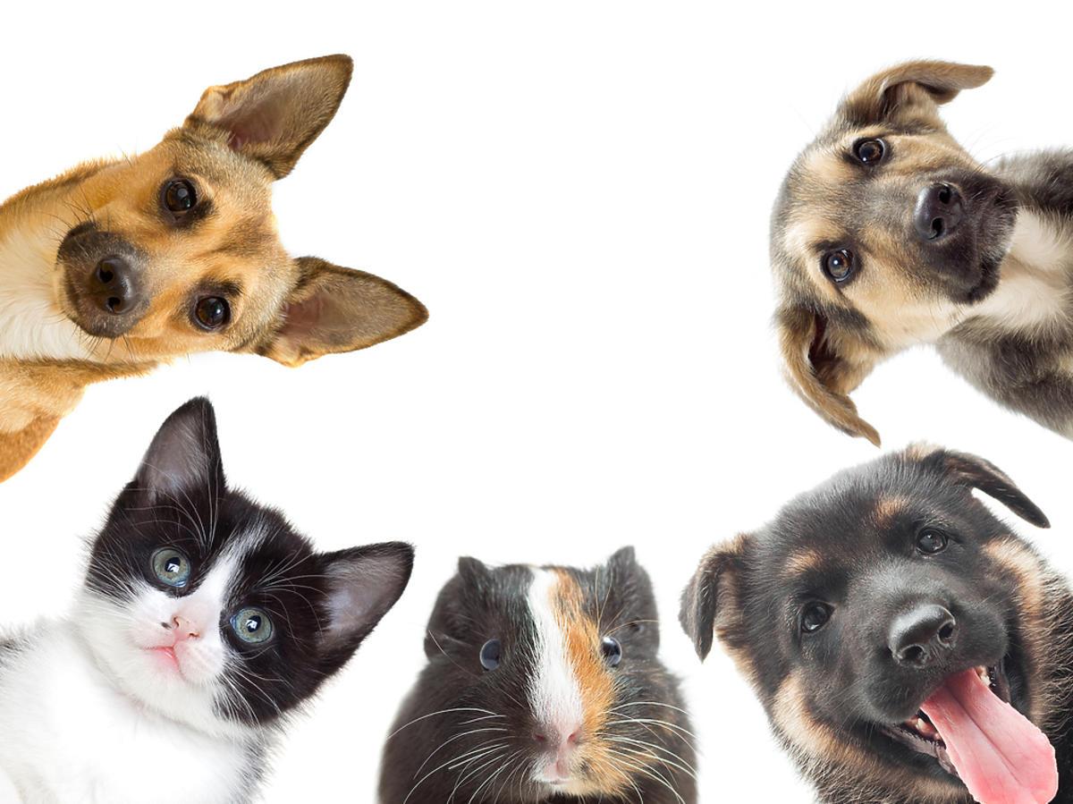 Grupa różnych zwierzat