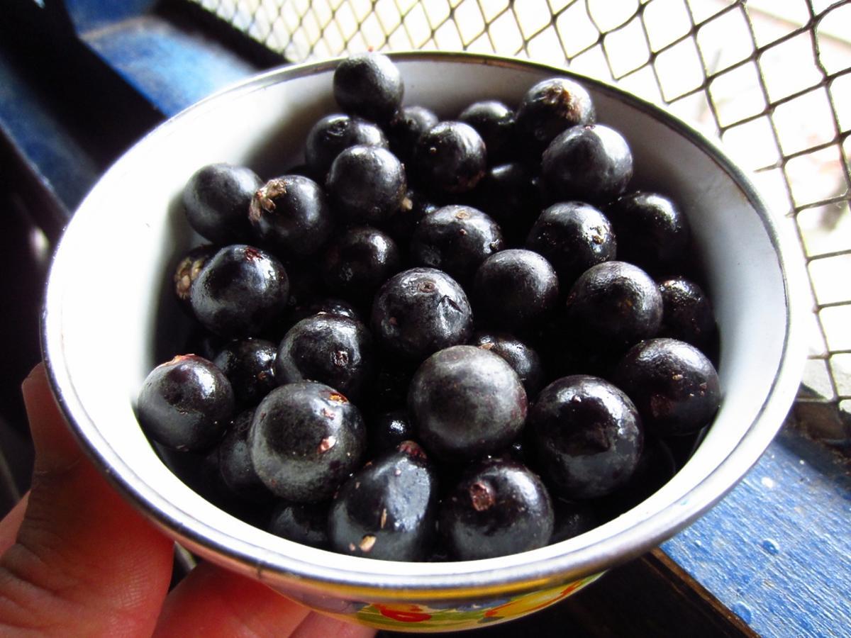 jagody w misce
