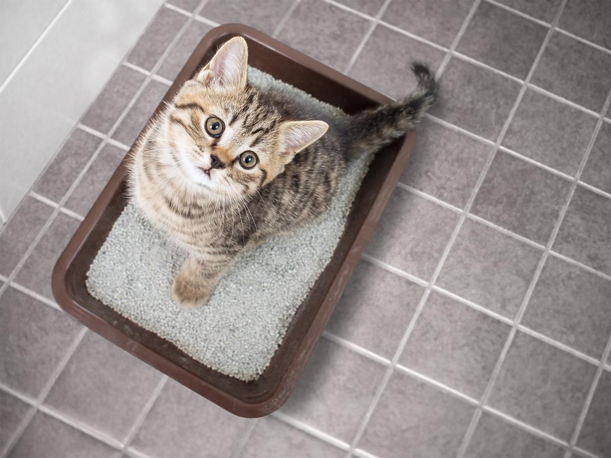Jaki żwirek dla kota wybrać? Rodzaje żwirków