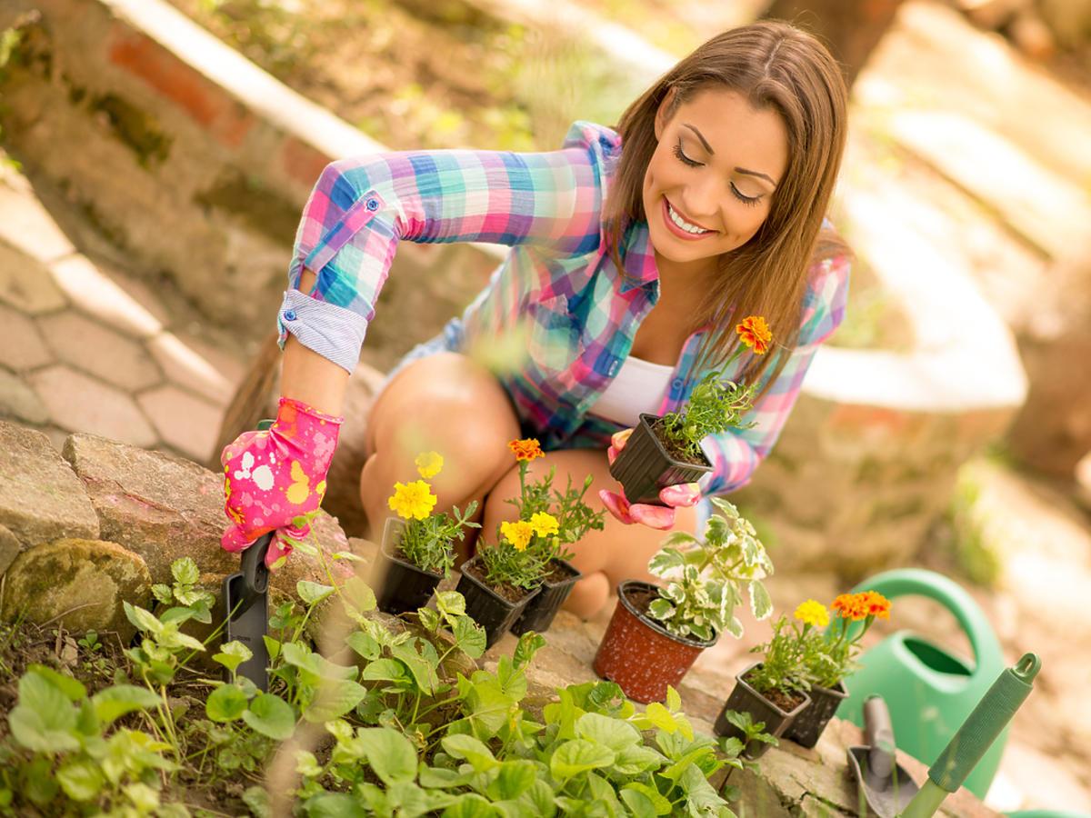 Kobieta sadzi kwiaty