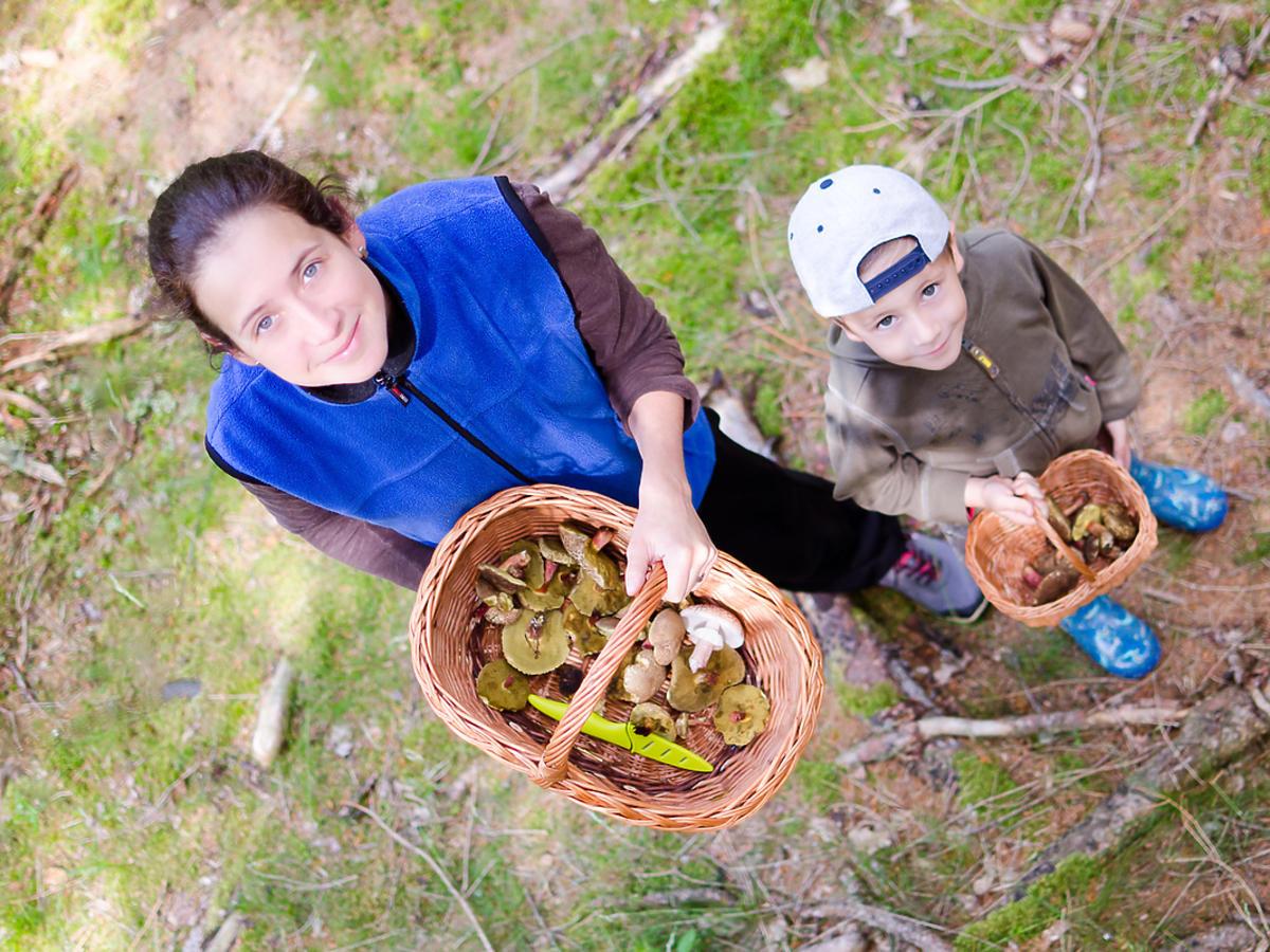 Kobieta zbiera grzyby w lesie