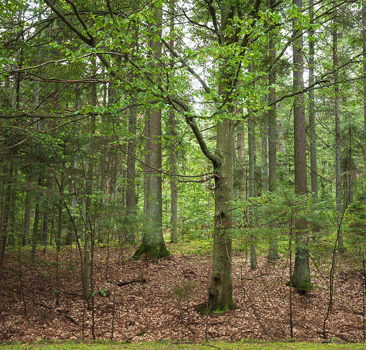 Koronawirus w Polsce. Wprowadzono tymczasowy zakaz wstępu do lasu. Na jak długo?