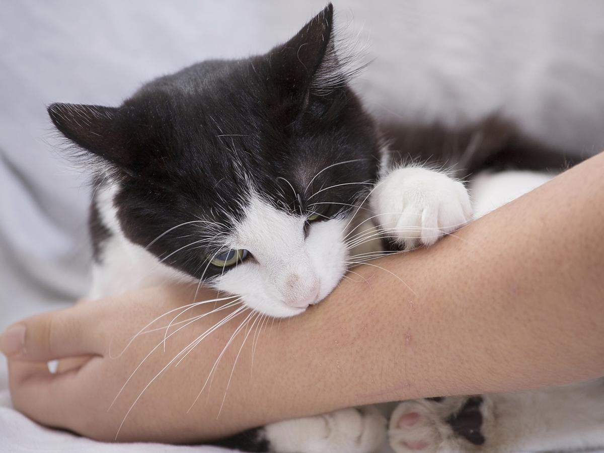 kot gryzący rękę właściciela