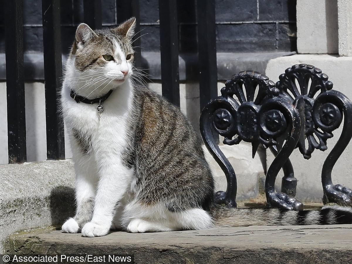 Larry, kot premier Wielkiej Brytanii z 10 Downing Street