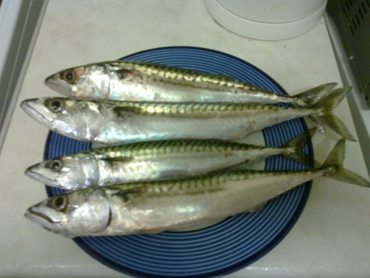 makrele-na-talerzu