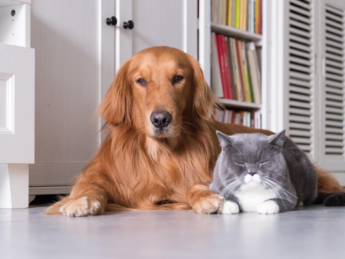 Masaż dla pupila – jak masować psa lub kota