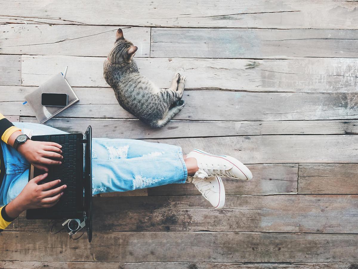 Mężczyzna pracuje na laptopie a obok leży jego kot.