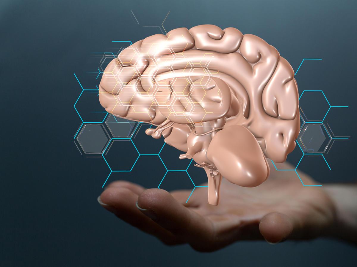 Mężczyzna trzyma na dłoni eksponat ludzkiego mózgu.