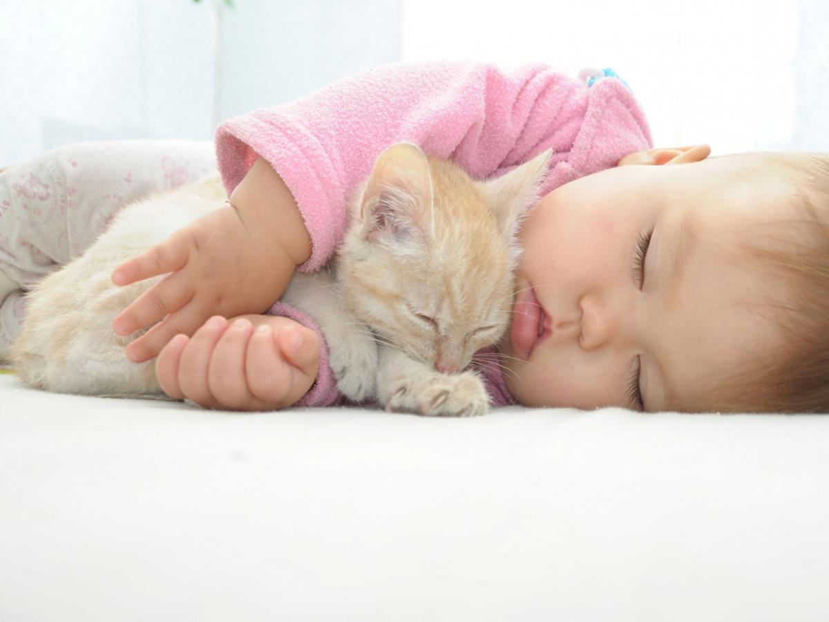 niemowlę śpi z rudym kotkiem