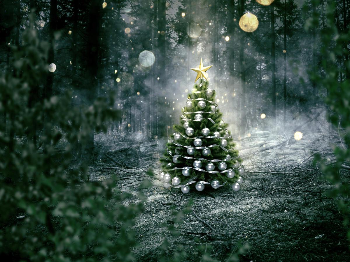 Pięknie oświetlona choinka w lesie