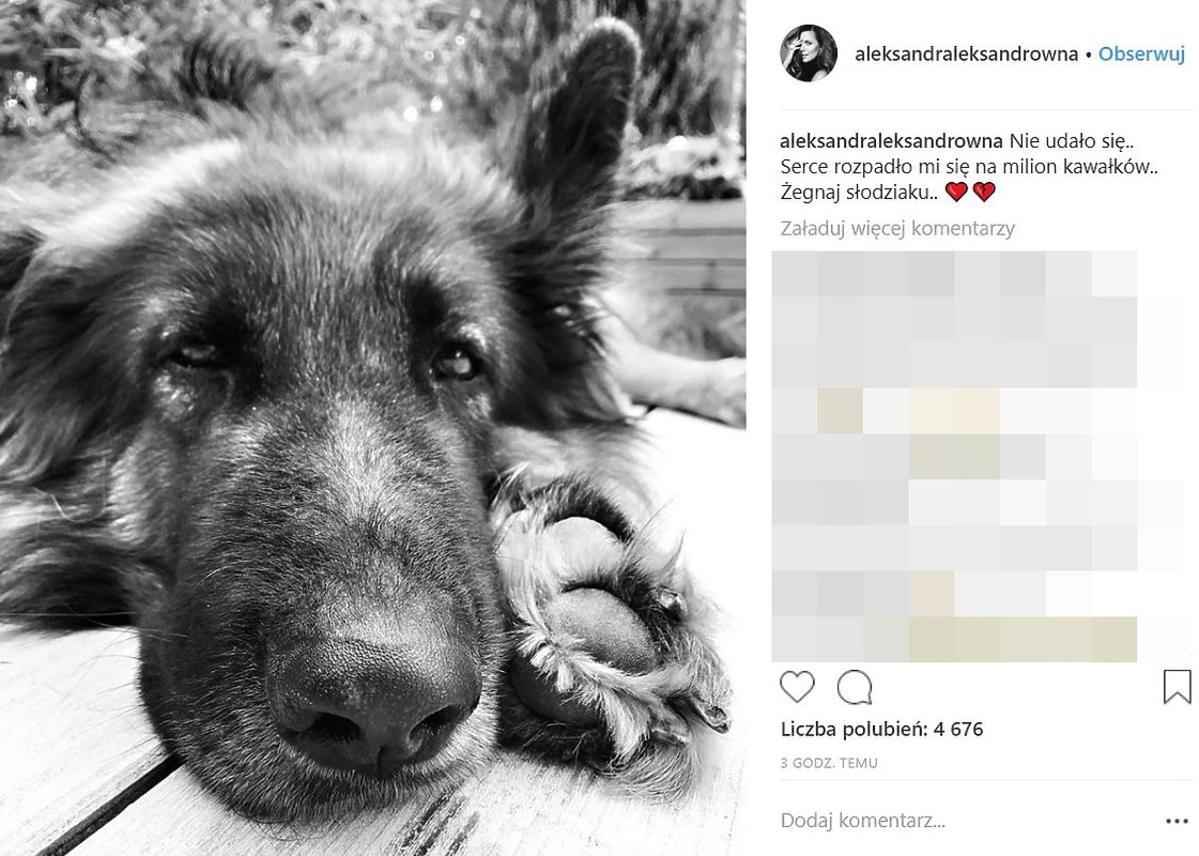 Pies Aleksandry Kwaśniewskiej nie żyje
