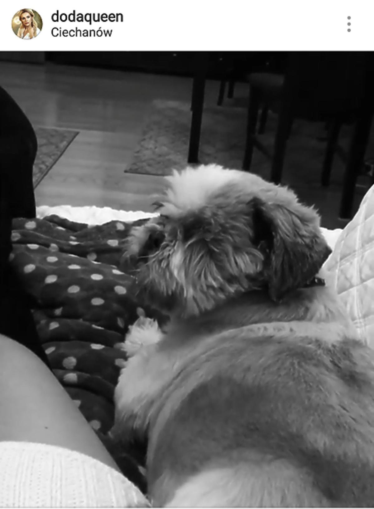 Pies Dody, Bandzior, nie żyje
