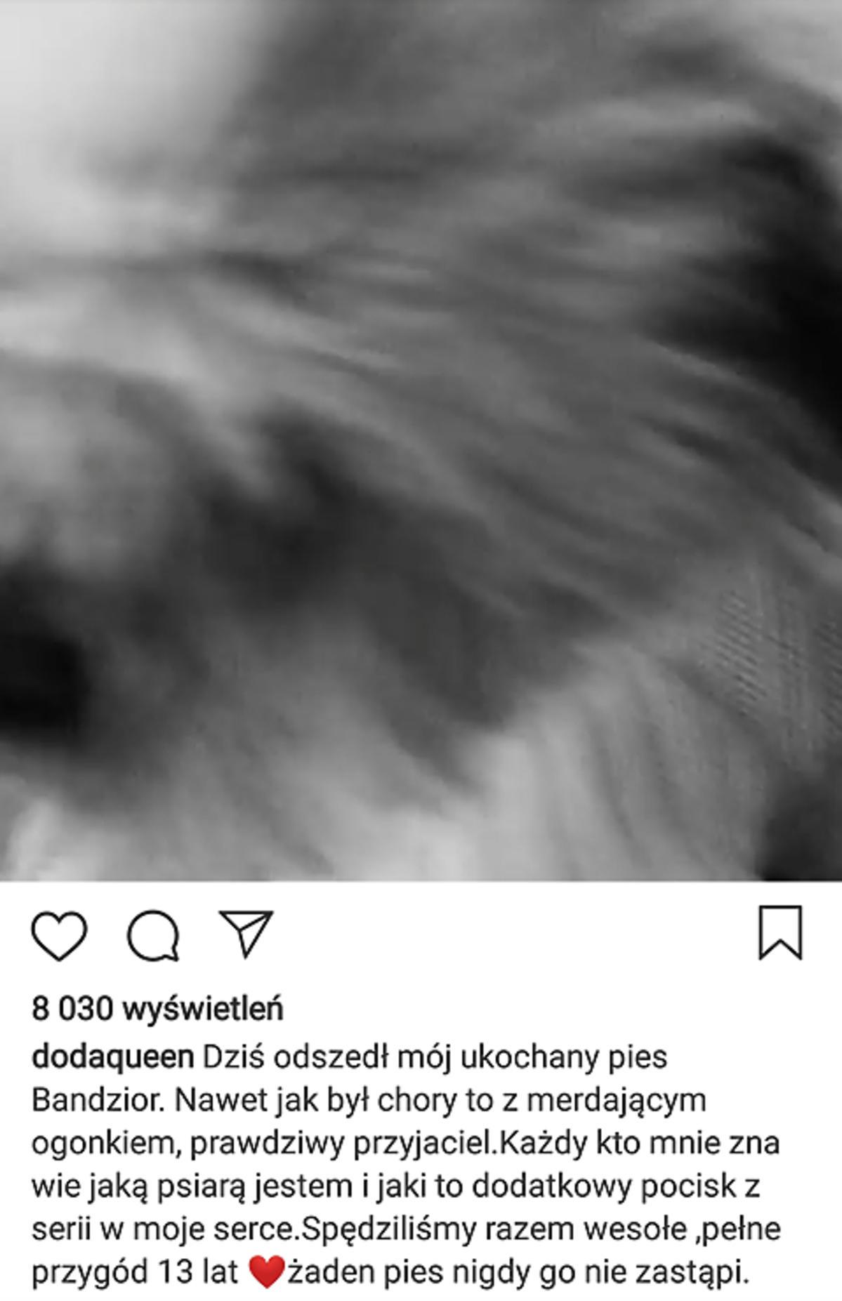 Pies Dody nie żyje