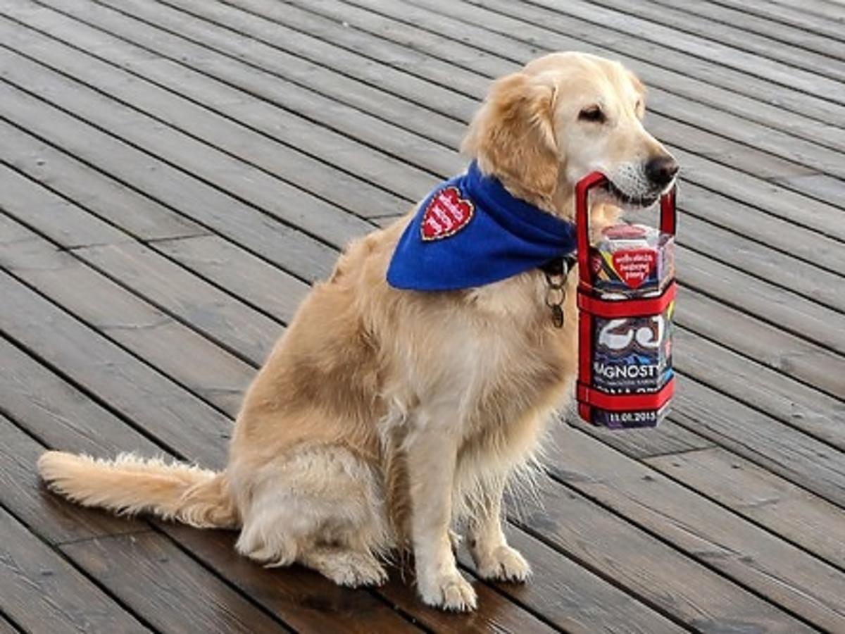 Pies jako wolontariusz WOŚP