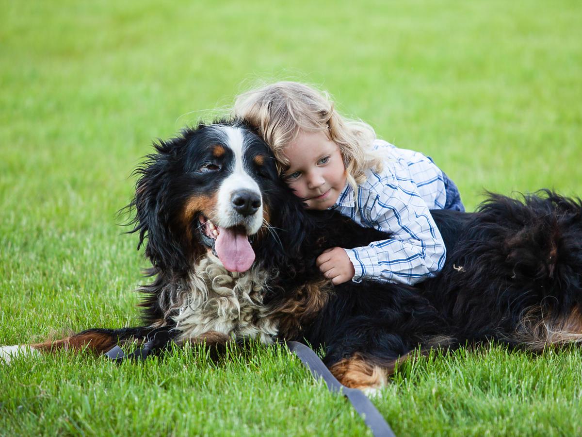 Pies leżący na trawie i bawiący się z dziewczynką
