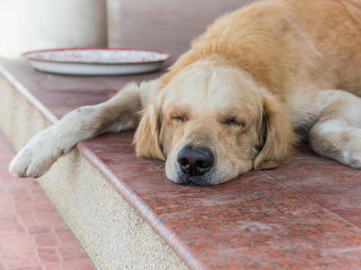 Pies śpi przed domem