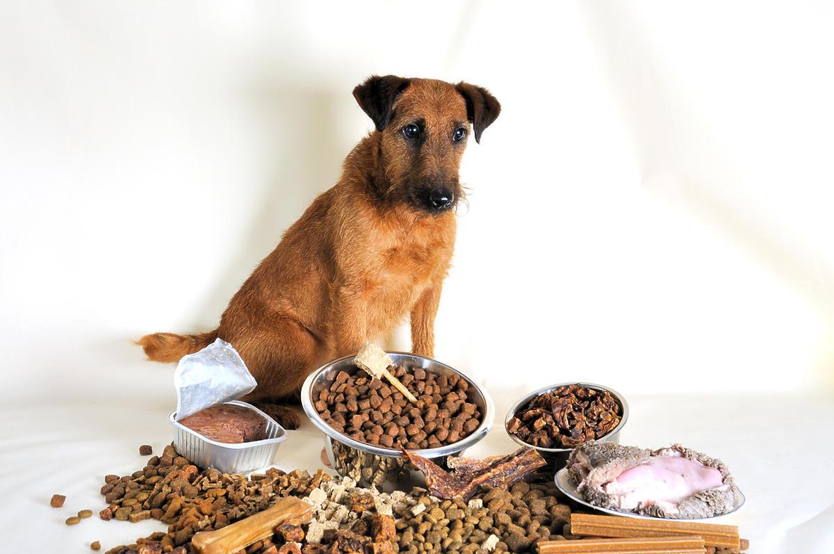 Pies zastanawia się którą karmę zjeść.