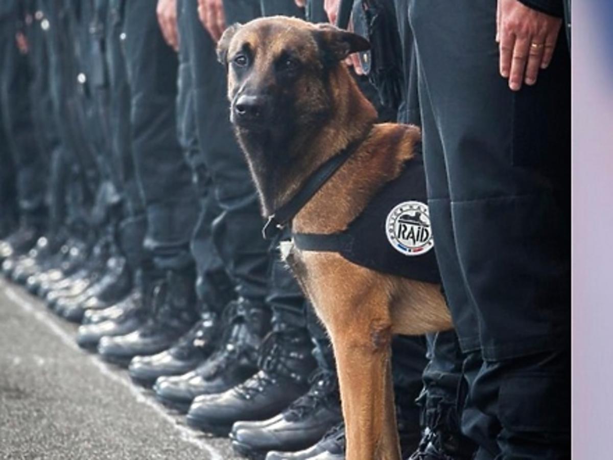 pies zginął w antyterrorystycznej operacji we Francji