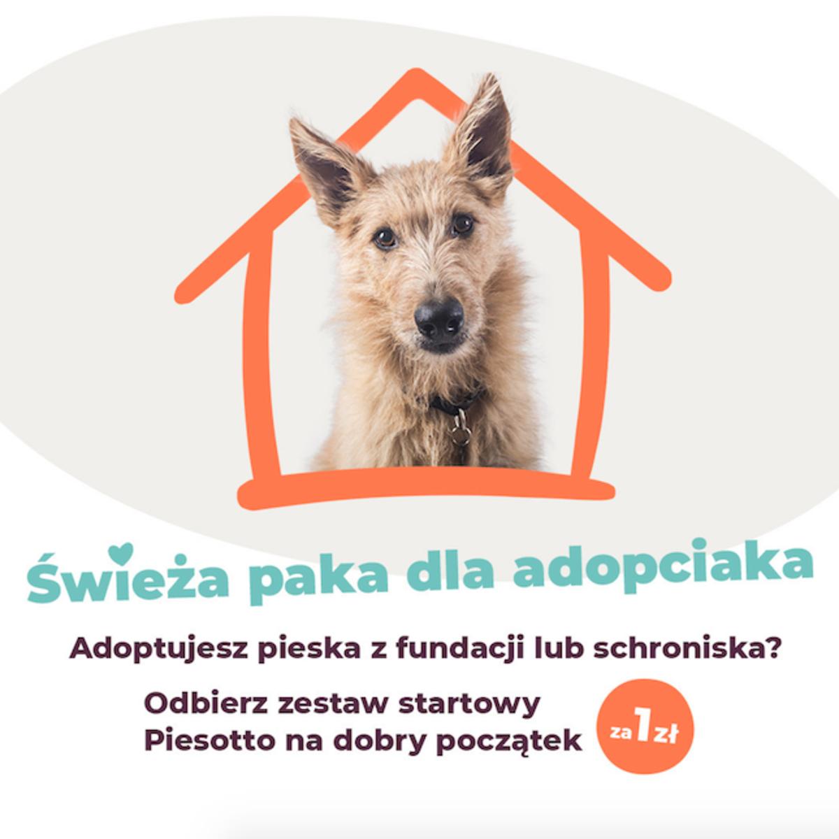Piesotto, Psi catering czyli dieta pudełkowa dla psa. Ile to kosztuje? Czy warto się zdecydować?