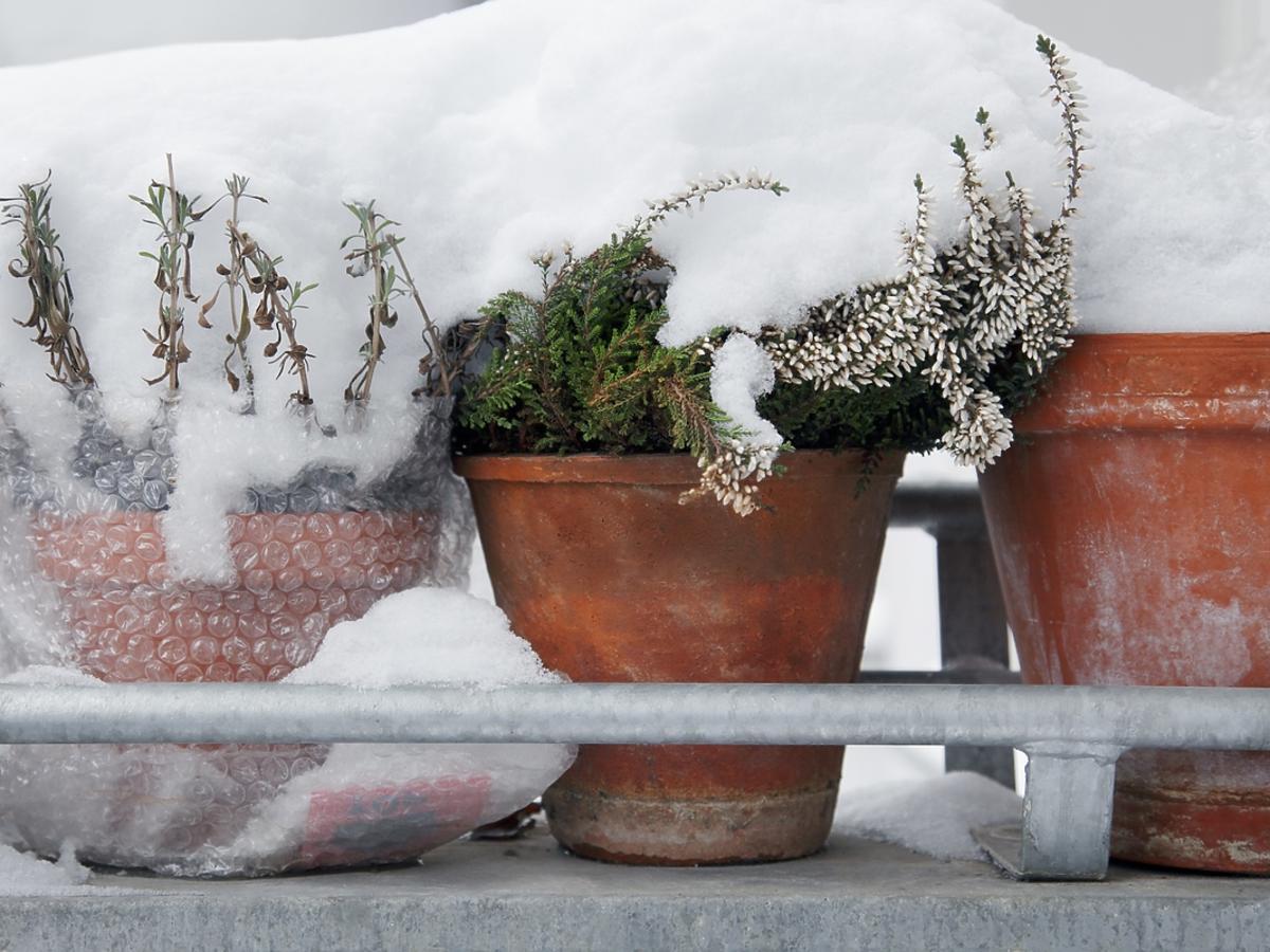 Pokryte śniegiem rośliny w doniczkach na balkonie.