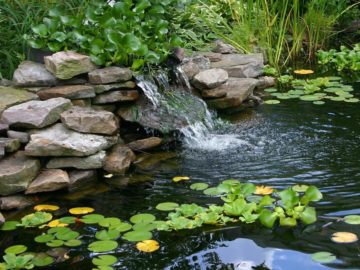 Popularne rośliny wodne