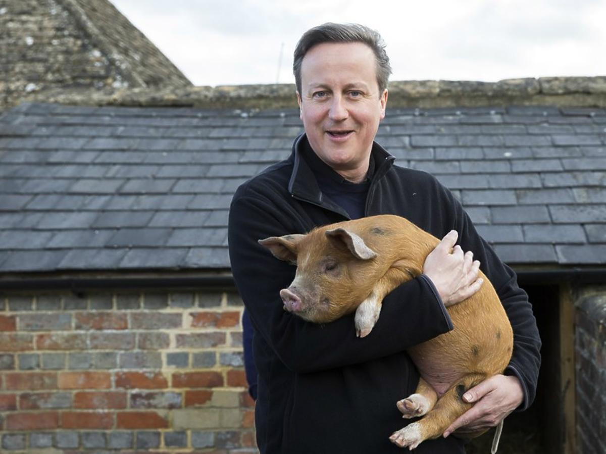Premier Wielkiej Brytanii David Cameron ze świnią na rękach