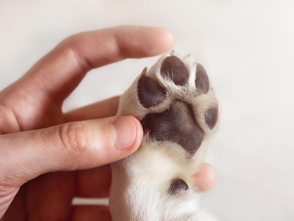 Psia łapa w ludzkiej dłoni
