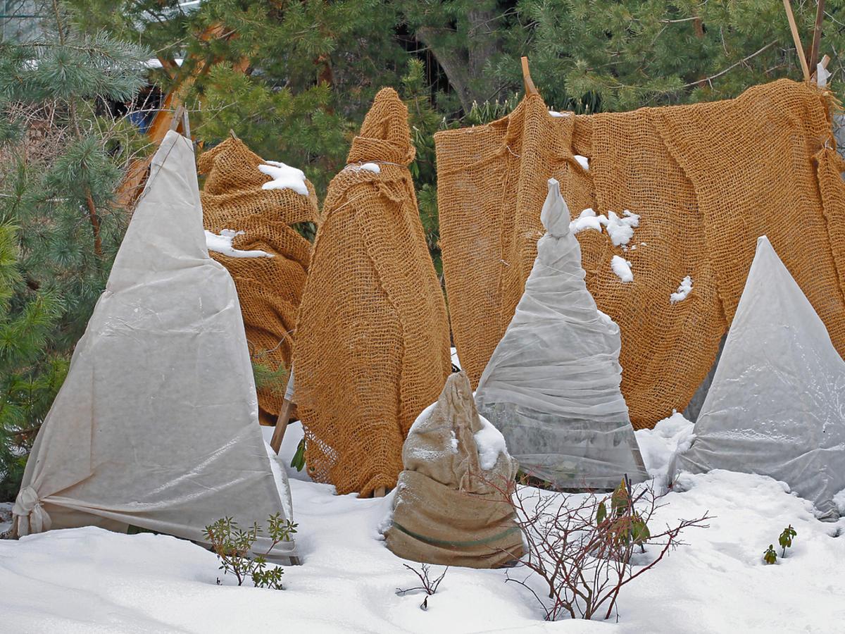 Rośliny ogrodowe okryte przed zimnem.