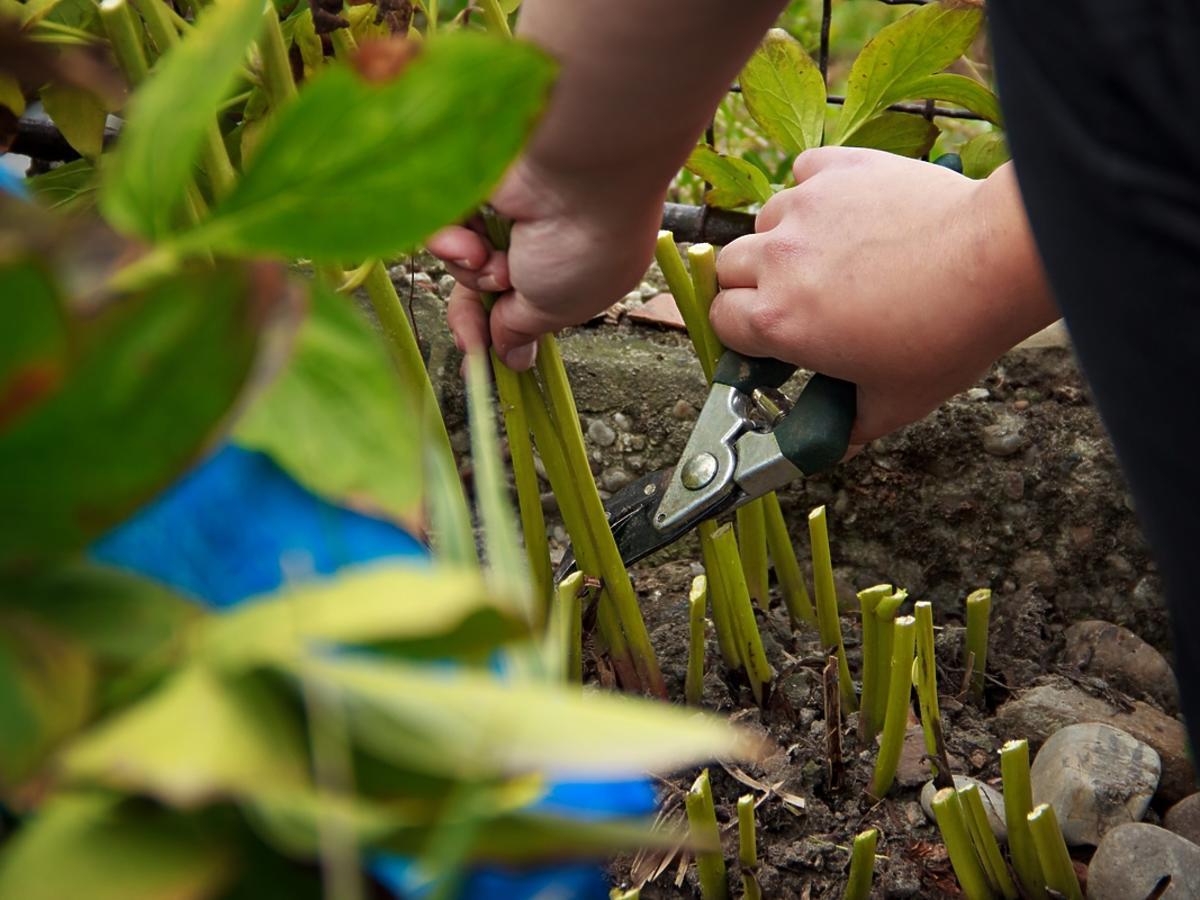 Sprzątanie ogrodu na wiosnę