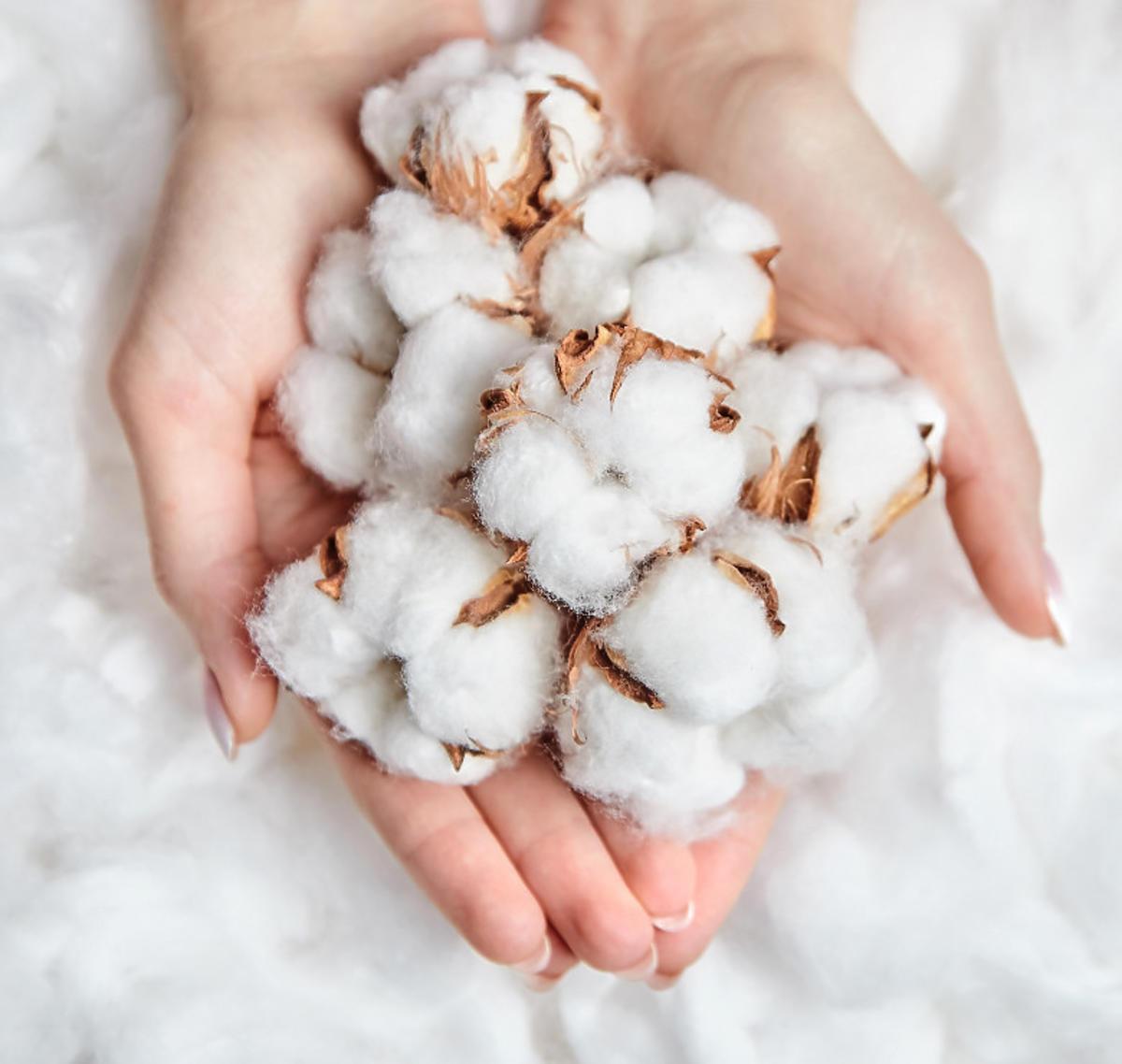 wkladki-bella-organic-cotton