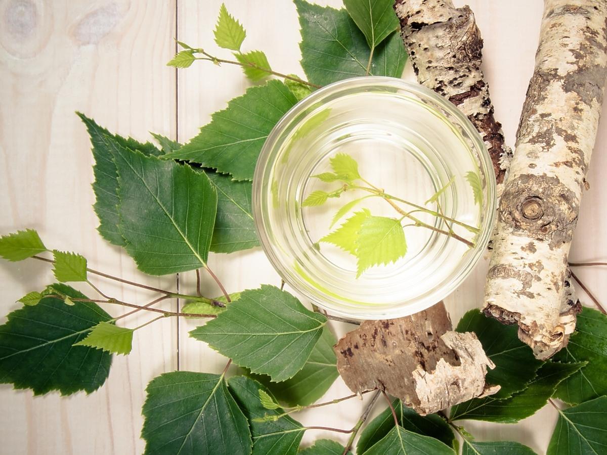 Woda brzozowa w szklanym naczyniu na tle gałęzi brzozy.