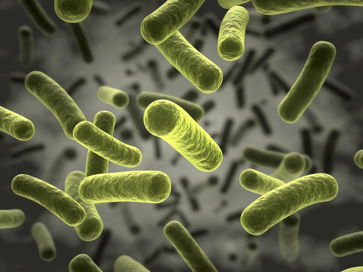 Zielone bakterie w powietrzu